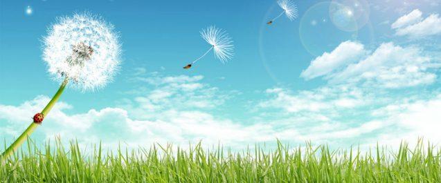 Pollini e riniti allergiche, i consigli per ridurre i sintomi delle allergie