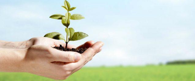 Ambiente e salute, sistema immunitario influenzato da fattori esterni