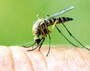 Estate alle porte, zanzare già pronte: prevenzione e trattamento delle loro punture